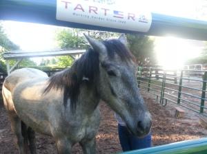 Halterless Mustang