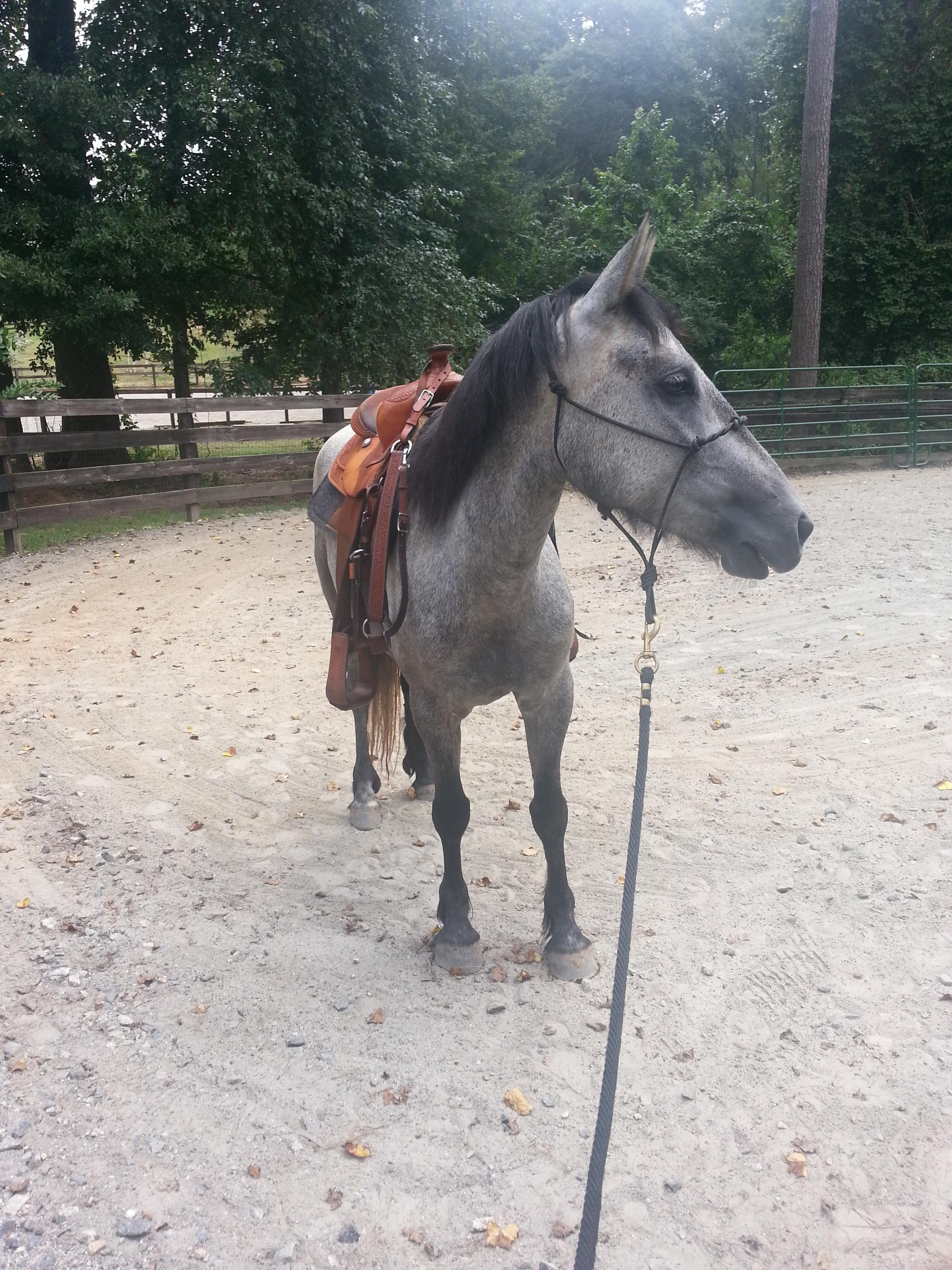 King Horse Togel