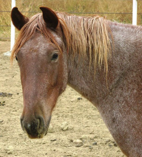 Blm Online Adoption The Horse Mutterer